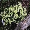Rhododendron17.jpg 1024 x 768 px 253.51 kB
