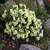 Rhododendron18.jpg 1024 x 768 px 230.48 kB