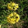 Rhododendron24.jpg 634 x 845 px 123.26 kB