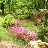 Rhododendron5.jpg 1024 x 768 px 220.44 kB