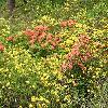 Rhododendron6.jpg 1024 x 768 px 305.08 kB