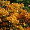 RhododendronFasching.jpg 1024 x 768 px 188.05 kB