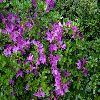 RhododendronJersov.jpg 1024 x 768 px 259.49 kB
