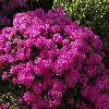 RhododendronLabe.jpg 1024 x 768 px 244.51 kB