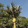 RhopalostylisSapida2.jpg 600 x 900 px 423.27 kB