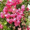 Rosa12.jpg 1024 x 768 px 287.65 kB