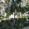 Roystonea2.jpg 1110 x 833 px 293.03 kB