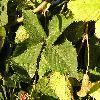 Rubus6.jpg 1024 x 768 px 209.71 kB