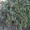 Rubus9.jpg 1024 x 768 px 318 kB