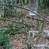 SansevieriaBacularis.jpg 681 x 908 px 459.27 kB