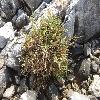 SarcocorniaFruticosa3.jpg 1024 x 768 px 276.47 kB