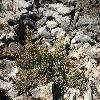 SarcocorniaFruticosa.jpg 1024 x 768 px 315.29 kB