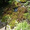 SarraceniaPurpurea5.jpg 1024 x 768 px 336.57 kB