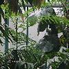 SchizolobiumParahyba2.jpg 1024 x 768 px 209.9 kB