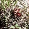 SclerocactusUncinatus2.jpg 669 x 893 px 405.14 kB