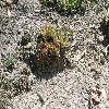 Sempervivum18.jpg 1127 x 845 px 346.91 kB