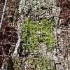 SempervivumCaucasicum2.jpg 1024 x 768 px 328.68 kB