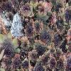 SempervivumOrion.jpg 1024 x 768 px 253.67 kB