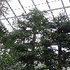 SequoiaSempervirens3.jpg 681 x 908 px 386.28 kB