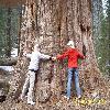 SequoiadendronGiganteum18.jpg 1127 x 845 px 323.01 kB