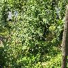 Solanum3.jpg 1110 x 833 px 372.96 kB
