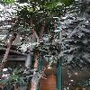 StenocarpusSinuatus2.jpg 642 x 856 px 181.81 kB
