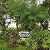 Tamarix4.jpg 576 x 768 px 165.01 kB