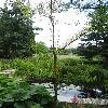 TaxodiumAscendens.jpg 681 x 908 px 393.87 kB