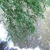 TaxodiumDistichum2.jpg 1024 x 768 px 242.87 kB