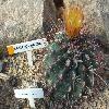 ThelocactusHamatocanthus4.jpg 1024 x 768 px 215.94 kB