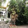 Trachycarpus13.jpg 1095 x 821 px 269.97 kB
