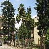 Trachycarpus15.jpg 1118 x 838 px 263.21 kB