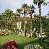 Trachycarpus28.jpg 1095 x 821 px 274.32 kB