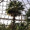 TrachycarpusExcelsa.jpg 768 x 1024 px 260.83 kB