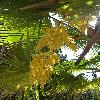 TrachycarpusFortunei9.jpg 720 x 960 px 389.04 kB