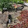 TulipaAcuminata.jpg 720 x 960 px 544.28 kB
