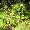 TyphaAngustifolia4.jpg 1024 x 768 px 238.23 kB