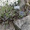 VeronicaArmena.jpg 1024 x 768 px 355.16 kB