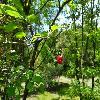 ViburnumOpulus4.jpg 1024 x 768 px 194.69 kB