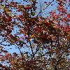 ViburnumOpulus7.jpg 681 x 908 px 259.74 kB