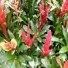 Vriesea3.jpg 1127 x 845 px 176.78 kB