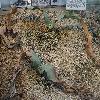 WelwitschiaMirabilis2.jpg 1224 x 918 px 414.44 kB