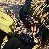 WelwitschiaMirabilis5.jpg 1024 x 673 px 220.92 kB
