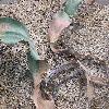 WelwitschiaMirabilis.jpg 1024 x 768 px 270.47 kB