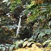 WisteriaSinensis6.jpg 681 x 908 px 357.87 kB
