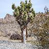 Yucca10.jpg 1201 x 804 px 326.46 kB