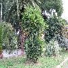 Yucca3.jpg 1086 x 815 px 310.9 kB