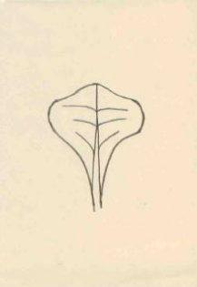 Klínovitý