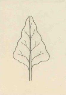 Kosníkovitý